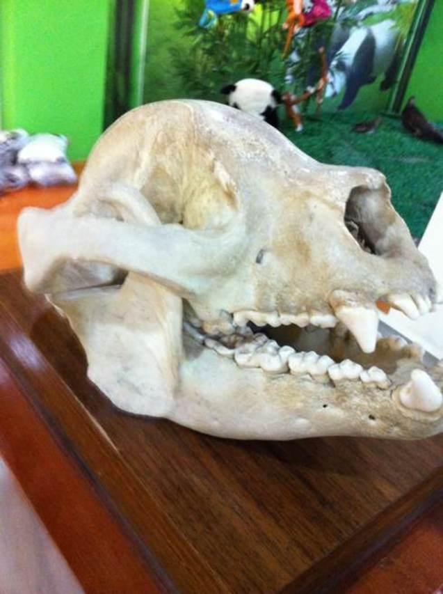 潮拍#熊猫头骨和掌印ohmonstereats_2012年10月.