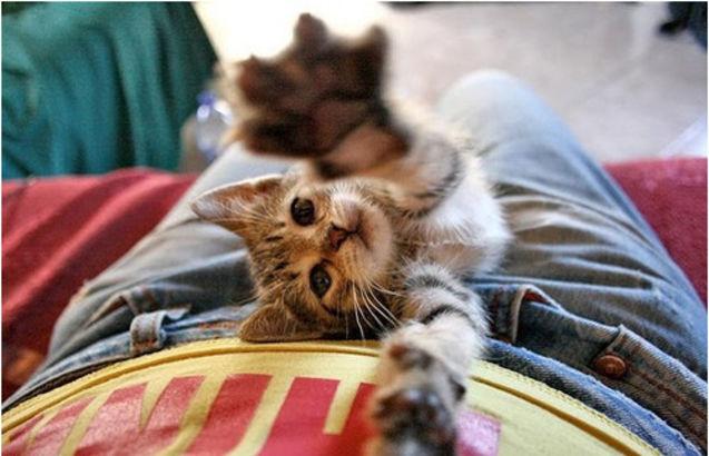 动物/#喵# 我要抱抱