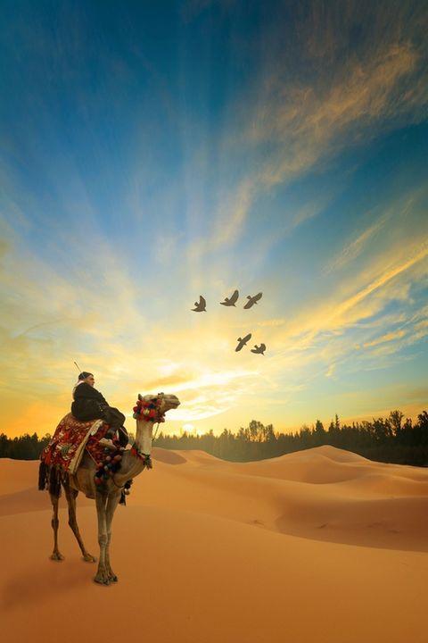 和沙漠的一百天图片_骆驼在沙漠卡通图片_沙漠中的骆驼_卡通图片-007鞋网